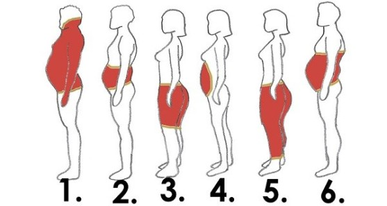 body fat distribution