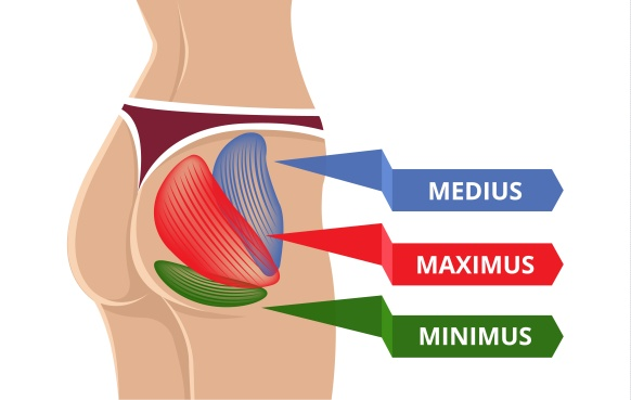 gluteal_muscles